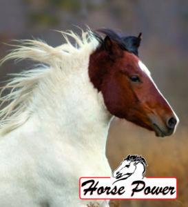 Horse power Giardini spa Fieracavalli verona