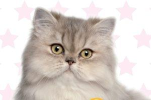 starcat alimenti per gatti Giadini spa